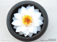 White-yellow Sacred Lotus soap flowers
